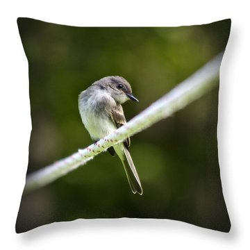 Eastern Phoebe Throw Pillow by Christina Rollo