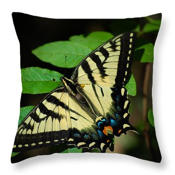 Eastern Tiger Swallowtail Throw Pillow by Bianca Nadeau