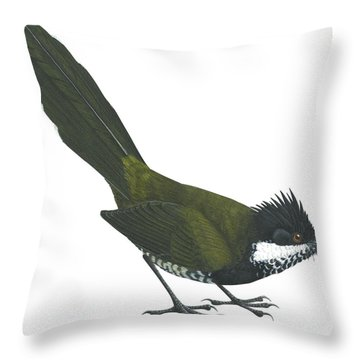 Eastern Whipbird Throw Pillow by Anonymous