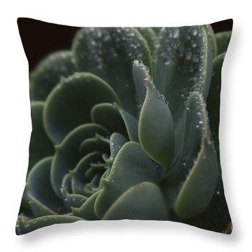 Echeveria Elegans X Lola - Crassulaceae Throw Pillow by Sharon Mau