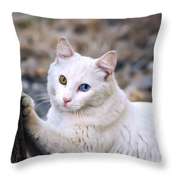 El Gato Throw Pillow by Camille Lopez