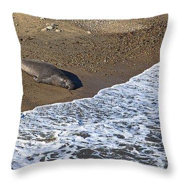 Elephant Seal Sunning On Beach Throw Pillow by Garry Gay
