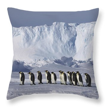 Emperor Penguins Walking Antarctica Throw Pillow by Frederique Olivier