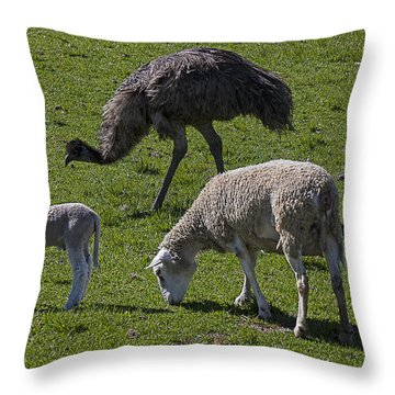 Emu And Sheep Throw Pillow by Garry Gay
