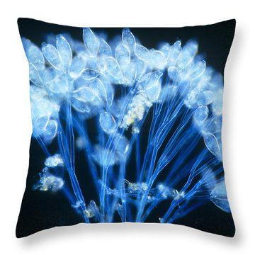 Epistylis Throw Pillow by Michael Abbey