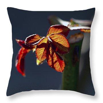 Eternal Throw Pillow by Joe Schofield