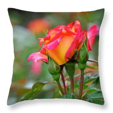 Eye Candy Throw Pillow by Rona Black