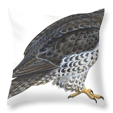 Falcon Throw Pillow by Anonymous