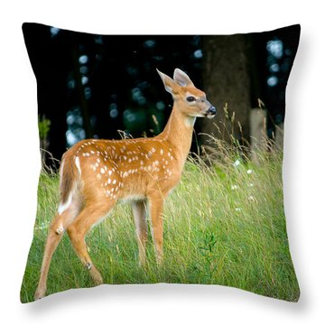 Fawn Throw Pillow by Shane Holsclaw