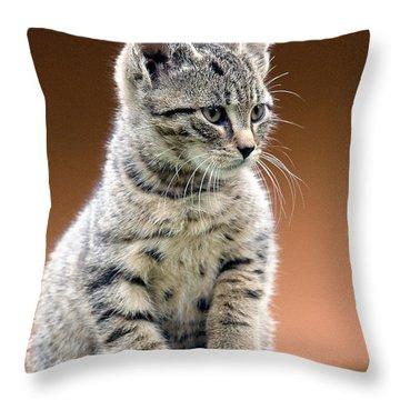 Felix Throw Pillow by Davorin Mance