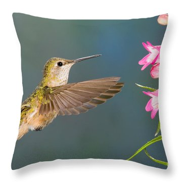 Female Broad-tailed Hummingbirds Throw Pillow by Anthony Mercieca