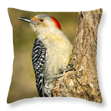 Female Red-bellied Woodpecker Throw Pillow by Bill Wakeley