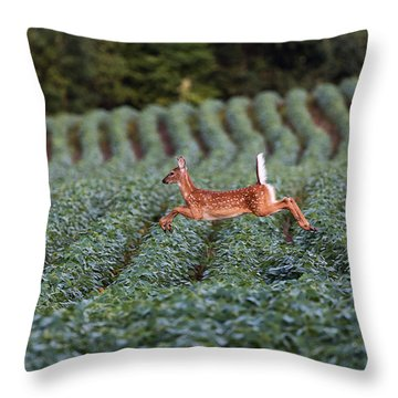 Flight Of The White-tailed Deer Throw Pillow by Everet Regal