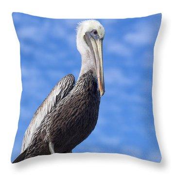 Florida Brown Pelican Throw Pillow by Kim Hojnacki