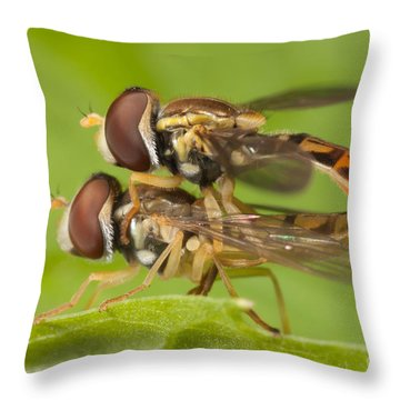 Flower Flies Mating Throw Pillow by Clarence Holmes
