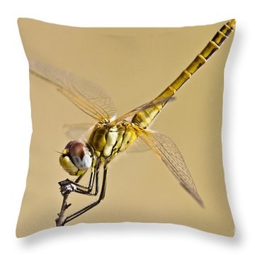 Fly Dragon Fly Throw Pillow by Heiko Koehrer-Wagner