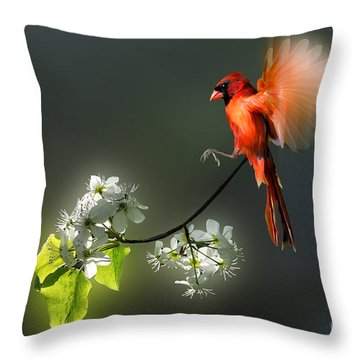 Flying Cardinal Landing On Branch Throw Pillow by Dan Friend