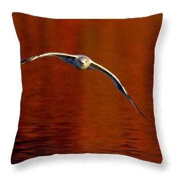Flying Gull On Fall Color Throw Pillow by Robert Frederick