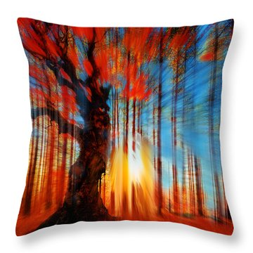 Forrest And Light Throw Pillow by Tony Rubino