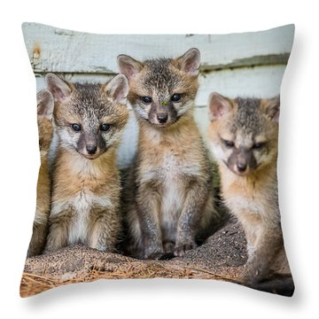 Four Fox Kits Throw Pillow by Paul Freidlund