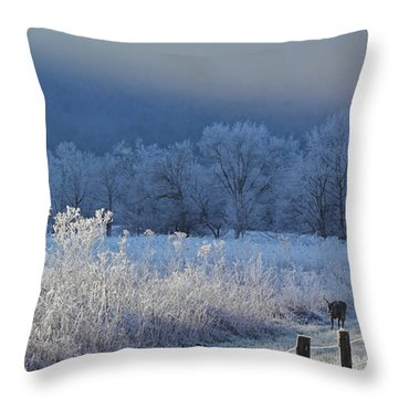 Frosty Cades Cove Shoot Throw Pillow by Douglas Stucky