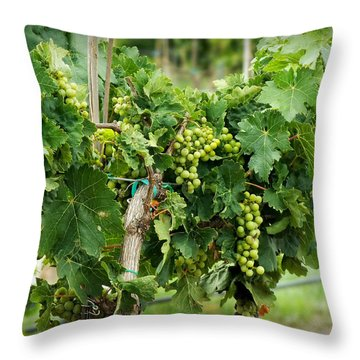 Fruit On The Vine Throw Pillow by Lucinda Walter