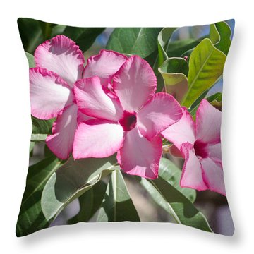 Fushia Oleander Near Phoenx Arizona 2 Throw Pillow by Douglas Barnett