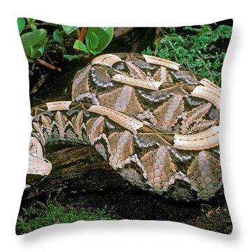 Gaboon Viper Throw Pillow by ER Degginger