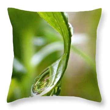 Garden Reflections 3 Throw Pillow by Kume Bryant