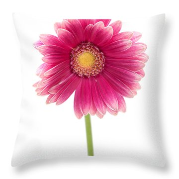 Gerbera Throw Pillow by Sebastian Musial