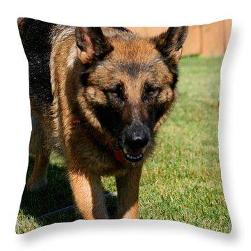 German Shepherd Throw Pillow by Kay Novy