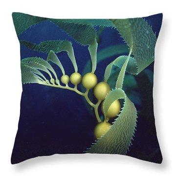 Giant Kelp Macrocystis Pyrifera Detail Throw Pillow by Flip Nicklin