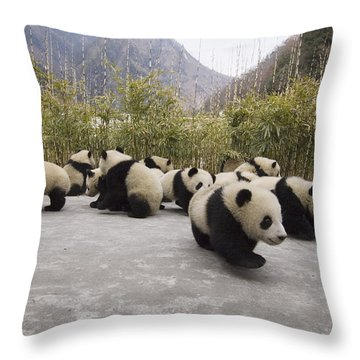 Giant Panda Cubs Wolong China Throw Pillow by Katherine Feng
