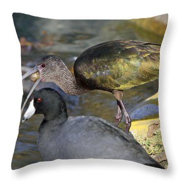 Glossy Ibis Eating Throw Pillow by Shoal Hollingsworth