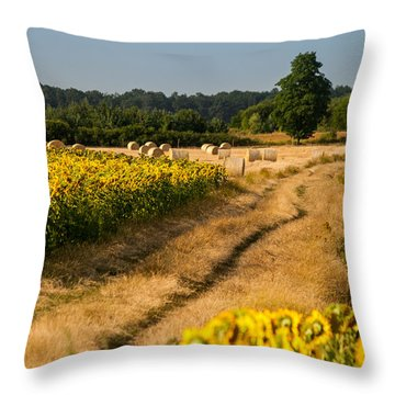 Golden Hour On Country Road Throw Pillow by Davorin Mance