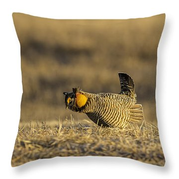 Golden Light On The Prairie Throw Pillow by Thomas Young