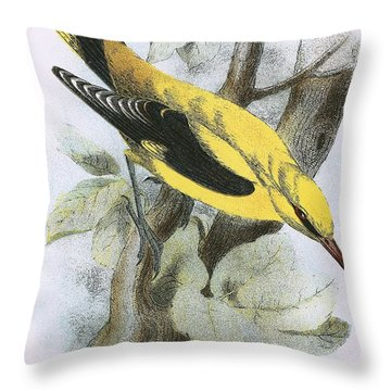 Golden Oriole Throw Pillow by English School