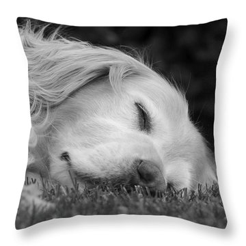 Golden Retriever Dog Sweet Dreams Black And White Throw Pillow by Jennie Marie Schell