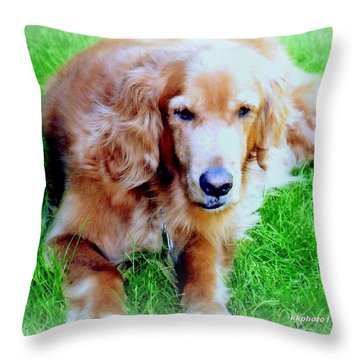 Golden Retriever Throw Pillow by Kay Novy