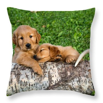 Golden Retriever Puppies Throw Pillow by Linda Freshwaters Arndt