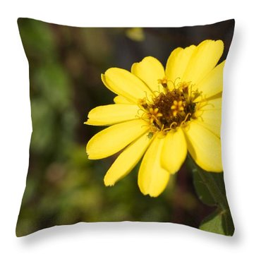 Golden Zinnia Throw Pillow by Photographic Arts And Design Studio