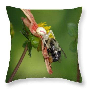 Goldenrod Spider Throw Pillow by James Peterson
