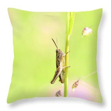 Grasshopper  Throw Pillow by Toppart Sweden