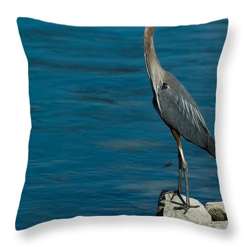Great Blue Heron Throw Pillow by Sebastian Musial