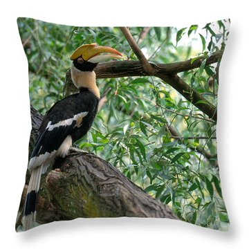 Great Indian Hornbill Throw Pillow by Art Wolfe