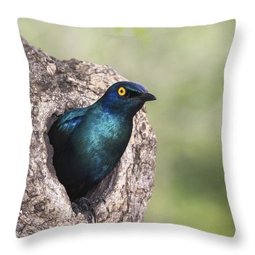 Greater Blue-eared Glossy-starling Throw Pillow by Andrew Schoeman