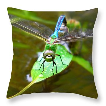 Green Darner Dragonfly Throw Pillow by Christina Rollo