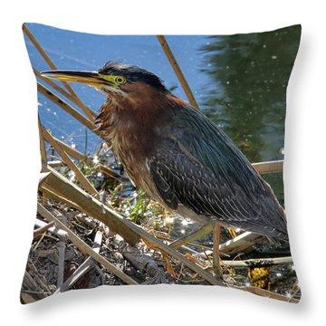 Green Heron  Throw Pillow by Mariola Bitner