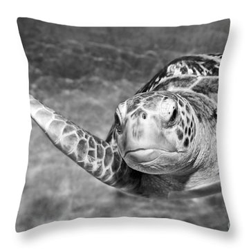 Green Sea Turtle. Throw Pillow by Jamie Pham