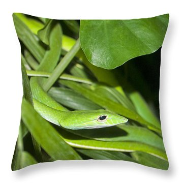 Green Snake Throw Pillow by Greg Reed